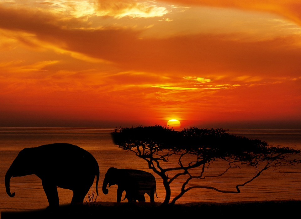 Matilde Calamai e la sua Africa tra amore, verità e