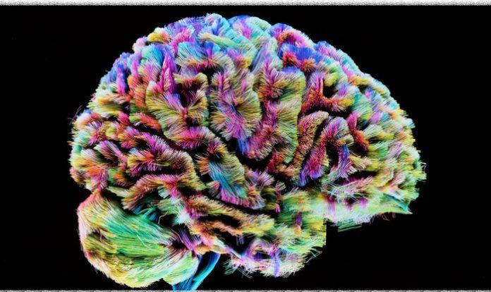 MyBrain di Carla Vittoria Maira: dalla fusione di esperienze di vita con uno studio approfondito sull'essere umano da un punto di vista neuroscientifico